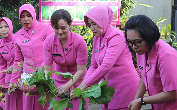 1 Juli 2019 Panen Sayur Mayur KRPL PC Lombok Barat c
