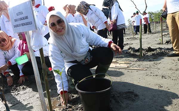 Gerakan Nasional Peduli Mangrove PD Bengkulu b