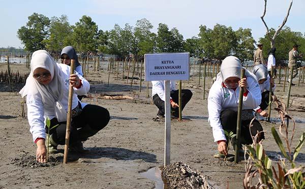 Gerakan Nasional Peduli Mangrove PD Bengkulu d